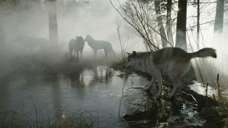 forest wolves - Other ...