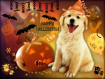 ♥ ☻☻☻ Cute Halloween Puppy ☻☻☻ ♥
