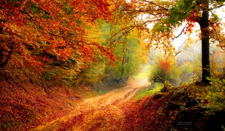 Out of the Woods - autumn, forest, nature, woods
