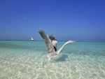 Heron Gull on Clear Aqua Waters