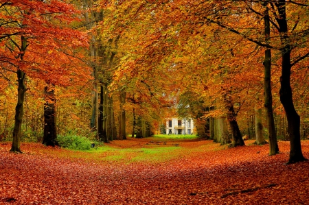 house in autumn park forests amp nature background lakeside house nature fall tranquil colors 1rc9