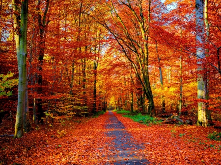 Autumn Trail Forests Amp Nature Background Wallpapers On