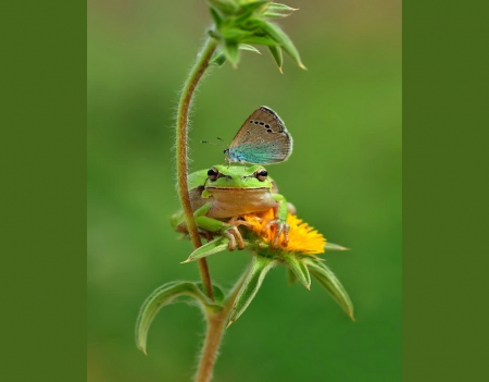 The frog and the butterfly - green, butterfly, flower, plant, frog, blue