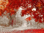 Snow in a Fall Season