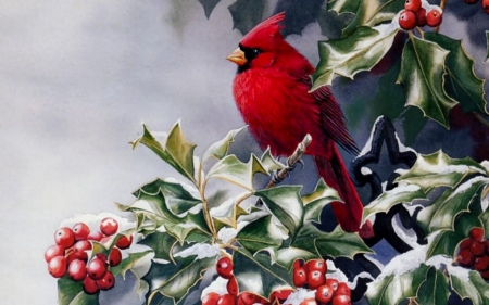 Red winter bird birds animals background wallpapers on - Winter cardinal background ...