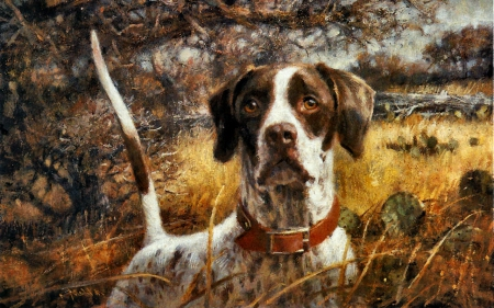 pointer hunting dog 1 - dogs & animals background wallpapers on