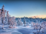 superb winter scene hdr