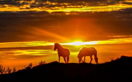 download wallpaper horses sunset - photo #25