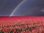 Flowers and the Rainbow