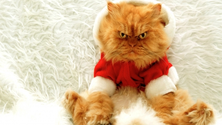 CHRISTMAS KITTY - Cats & Animals Background Wallpapers on Desktop ...