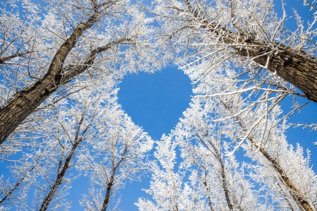 two hearts...   Heart in nature, Winter love, I love heart   Hearts In Nature Winter