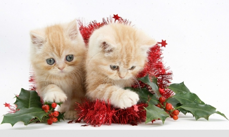 christmas kittens christmas cats and dogs wallpapers and