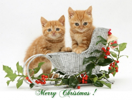 merrychristmas �� cats amp animals background wallpapers