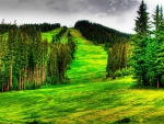 beautiful mountain ski slope in summer hdr
