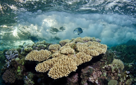 Fish among the Corals - Nature, Coral Reefs, Fish, Oceans, Underwater