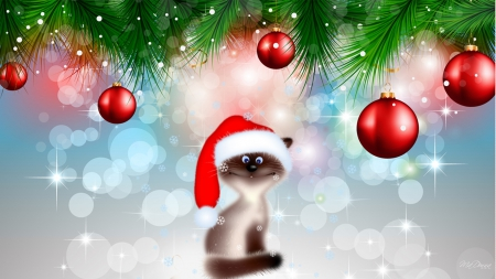 Silly Christmas Cat - Cats & Animals Background Wallpapers on ...