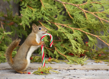 Happy squirrel squirrels animals background wallpapers - Funny squirrel backgrounds ...