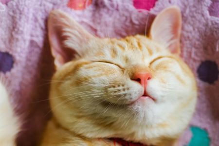 Image Gallery happy cat face
