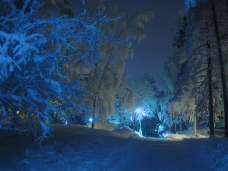 Winter Forest at Night! - Winter & Nature Background ...