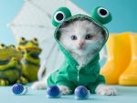 Funny Kitty Frog