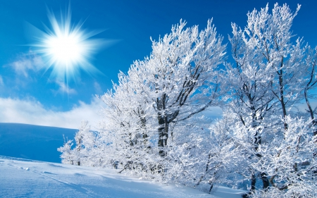 sunny winter day winter amp nature background