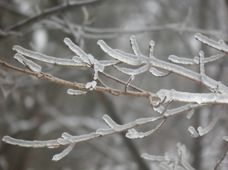 ice storm - cold, tree, ice, storm