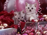 Kittens and pink Christmas