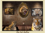 cats gallery