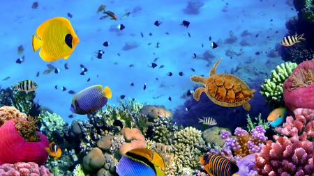 wonderful sea life on a coral reef - colors, sea, coral reef, turtle, fish