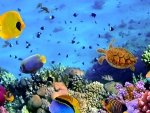 wonderful sea life on a coral reef