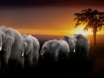 a herd of elephants at sunset in africa