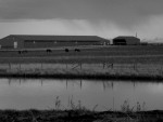 Horses and farm houses in black and white