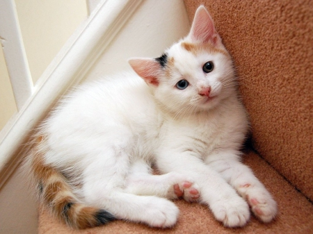 kittens for adoption in nc