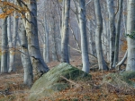 rocks in a misty birch trees forest
