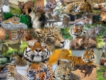 Big Cat Collage