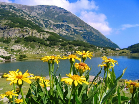 Flowers Near Mountain River  Rivers &amp Nature Background