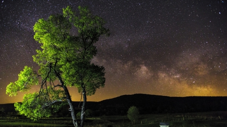 beautiful tree under starry sky - stars, tree, sky, night