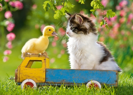 Image result for Kittens Playing in Flowers