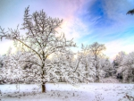 beautiful colored sky above forest in winter hdr