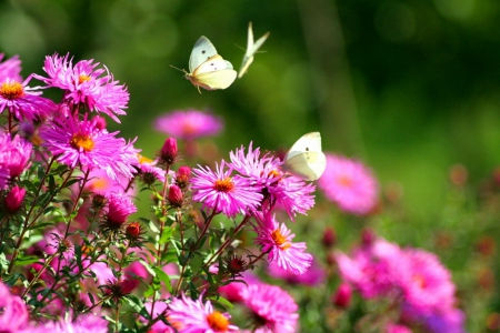 Spring - flowers, garden, spring, beautiful, colorful, pink, freshness, pretty, lovely, butterfly, park, wildflowers, greenery, beauity