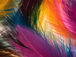 Multicolor Feathers