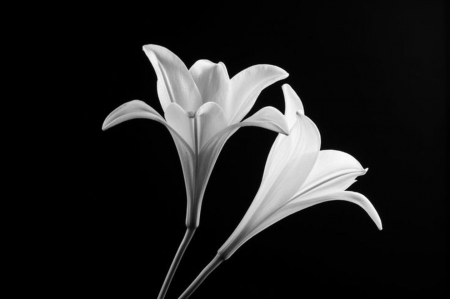 Minimalist - Flowers & Nature Background Wallpapers on ...