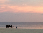Sunset, beach with horses, Mexico