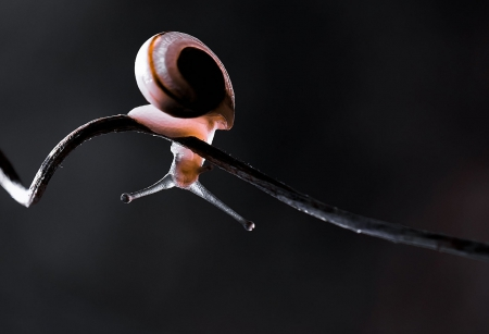 Snail - snails, close-up, lights, snail, nature