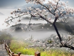 tree blossoms by mountain stairs in fog