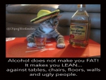 Cuervo Cat