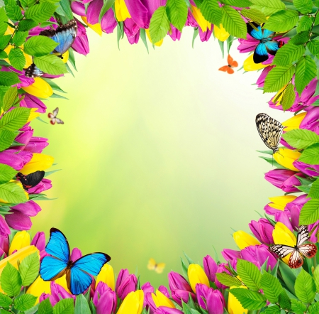 Flowers Amp Butterflies Flowers Amp Nature Background