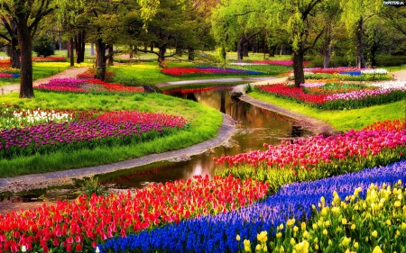 Image result for keukenhof gardens 2014