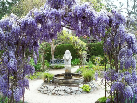 Blue Wisteria Fountains Wallpapers And Images Desktop
