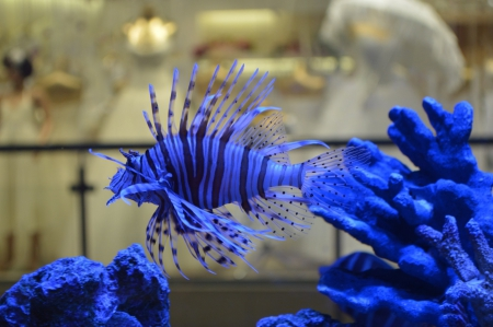 * Blue and beautiful * - blue, animals, fish, animal